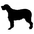 "Куче "" Golden Retriever"""