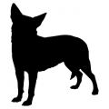 "Куче ""Chihuahua"""