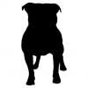 "Куче ""Pitbull"""