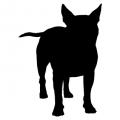 "Куче ""Bull Terrier"""