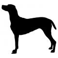 """Куче """"Weimaraner"""""""