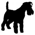 "Куче ""Miniature Schnauzer"""