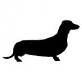 """Куче """"Dachshund"""""""