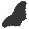 Насекомо - пеперуда