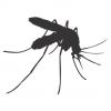 Насекомо - комар
